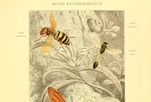 Curiosities / Botanical, Scientific, etc. / by Adelaidebeatrice Laing