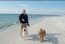 Pet-Friendly Beaches! / The beaches of Gulf County, FL have repeatedly been voted as the top pet friendly beaches in the nation! Wide, uncrowded beaches and lots of pet friendly accommodations makes GCFL the perfect place to vacation with your favorite four-legged friend.
