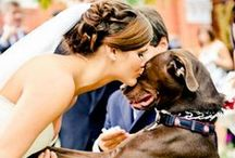 Four-legged Wedding Guests / by Southern Bride & Groom