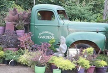 Favorite local nurseries and gardens