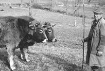 Raymond Depardon / Raymond Depardon (Villefranche-sur-Saône, 6 juillet 1942) est un photographe, réalisateur, journaliste et scénariste français. Considéré comme l'un des maîtres du film documentaire1, il a créé l'agence photographique Gamma en 1966 et est membre de Magnum Photos depuis 19792. Il est l'auteur de la photo officielle du président François Hollande.