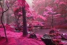 Ain't Nature Pretty?