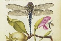 Flora et Fauna