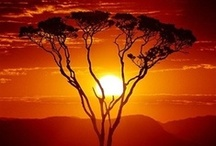 African Sunsets / Some truly beautiful African sunsets