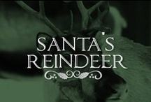 Santa's Reindeer  / There's no team like Santa's festive furry friends! / by Lolly Christmas