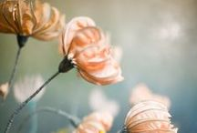 Flora / life, love