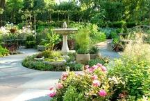 Herb Gardens / by Linnea Wieland