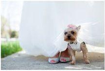 Cafe La Cave wedding / Weddings at Cafe La Cave in Chicago, IL