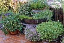 Gardening! / by Venia