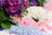 Flowers / by Diane Cloud