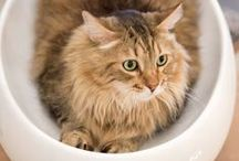 Pets /  Lovable domesticated animals of all kinds featured in the Home section of The New York Times.