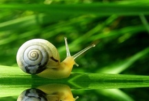 Frogs and Snails / by Barbara Carola