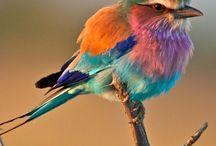 Birds / by Diane Cloud