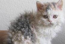 Kitty kitty kitty / by Jamie Montgomery
