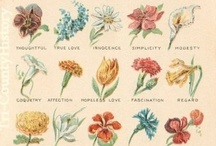Botanical Illustrations / by Missouri Botanical Garden