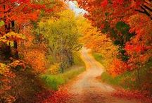 Fall Harvest / by Betty Wesley