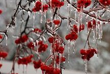 Winter / by Betty Wesley