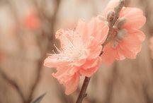 flores / by Marivi Pazos