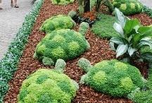 Gardening Oddities