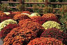 Fall Gardening Tips / Visit www.missouribotanicalgarden.org