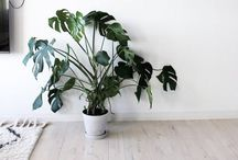 plants / plants and greenery for inside and outside. #urbanjunglebloggers