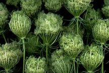 Herbs and Plants / botanical beauty and herbal inspiration for home herbalism