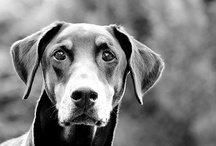 Truly Great Dog Photography / The best photos we've found that vividly capture the dog's unique spirit.