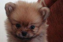 Puppy love / by Veronica Skuza