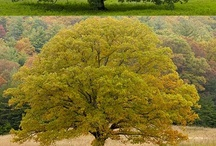 Arbor / by S.W.Q.V. Garden