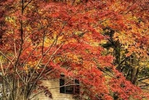 Colors of Fall / by handpaintedfurniture