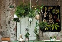 herbal workshop / herbal workshop inspiration / home apothecary work space