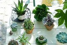 Blumen & Pflanzen
