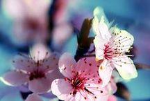 Escape to Frette Favorite Garden / THE SECRET GARDEN: A LOVE STORY. Join Us for an Exclusive Journey into Frette's Secret Gardens. Go to Frette.com
