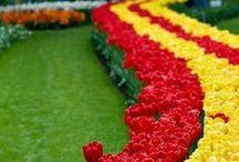 Glorify These Gardens! / by Susan Robbins Mauriello