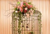 Birdcages / ~Just So Pretty~ / by Susan Robbins Mauriello