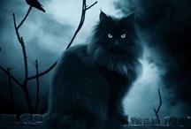 Halloween / by Regina Catron