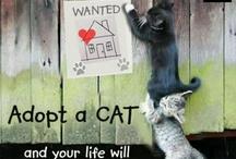 Cats! / by Regina Catron