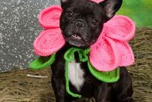 Crochet for Pets / Animals / by Meladora's Creations