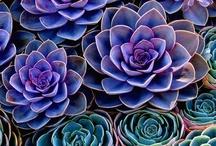 Succulent ideas / by Misty Bethel