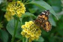 Butterflies / by Terri Hanson