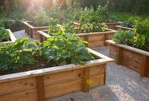 Gardening / by Wendy Tallman