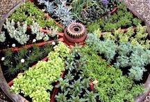 Herbs / by Nancy Floyd