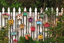 Bird Cages & Bird Houses / by JulieAnne Fitch