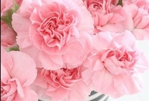 Flowers: Carnations
