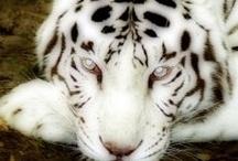 Amazing Animal Photo's... / by Erica Nelson