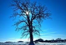 Árvores / Trees - Arbres - Bäume - Arboles