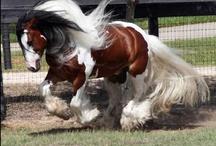 Horses / by Nancy Floyd