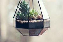 Terrarium / Design / La nature est précieuse, préservons là !