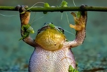 Frogs, everything Frogs / by Bonnie