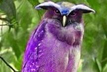 Owls / by Bonnie